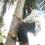 অভিনব কায়দা অবলম্বন : নারিকেলের সংকট বোঝাতে গাছে উঠে ভাষণ দিলেন মন্ত্রী